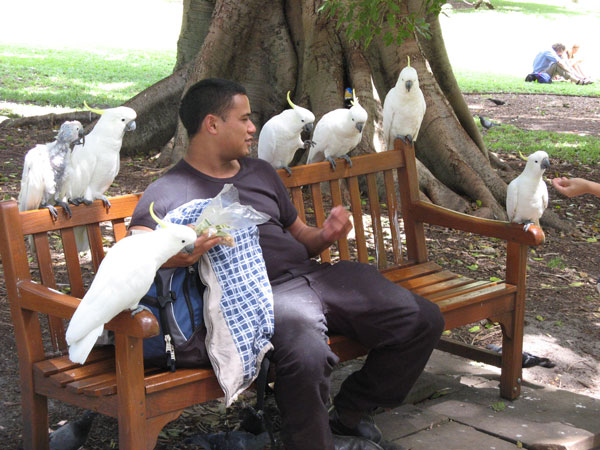 Garden-cockatoos
