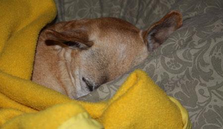 Sleepy-Lucy