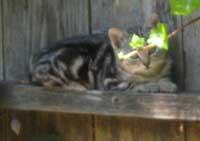 Kittycrop